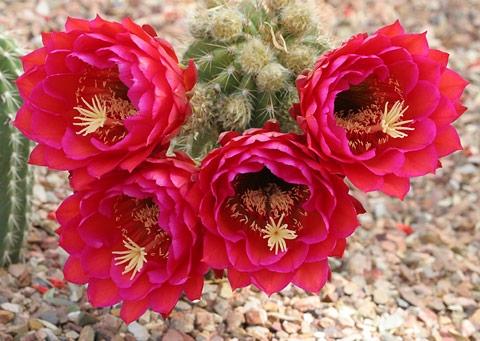 خارهای امروز گل های فردایند